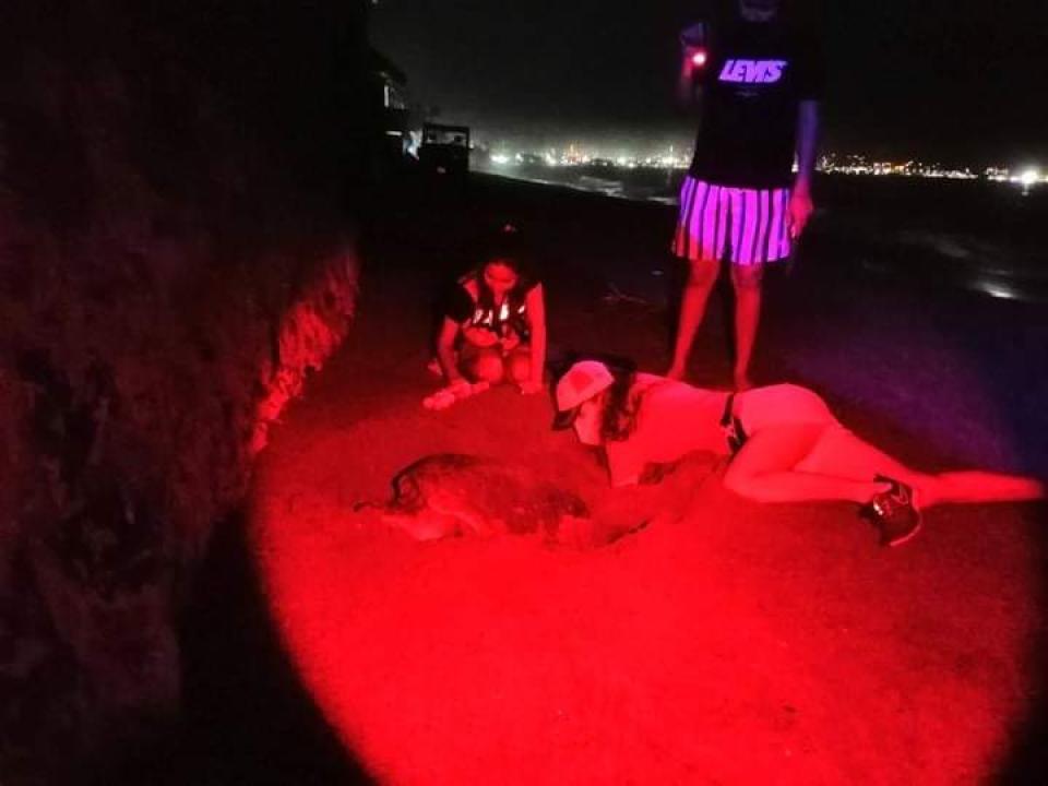 Logran rescatar 22 nidos de tortuga en Manzanillo