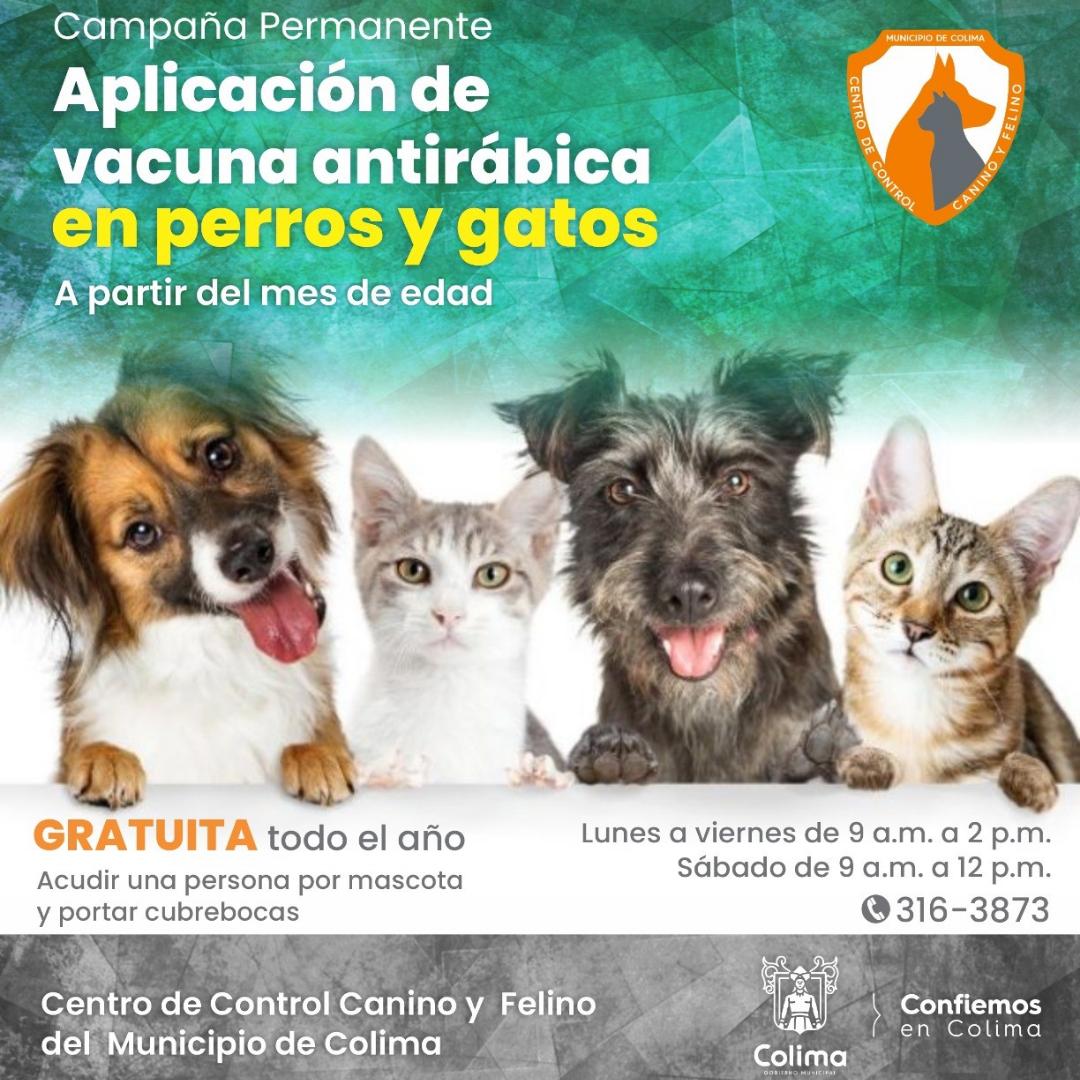 Campaña gratuita de vacunación antirrábica para perros y gatos en el Centro de Control Canino y Felino de Colima.