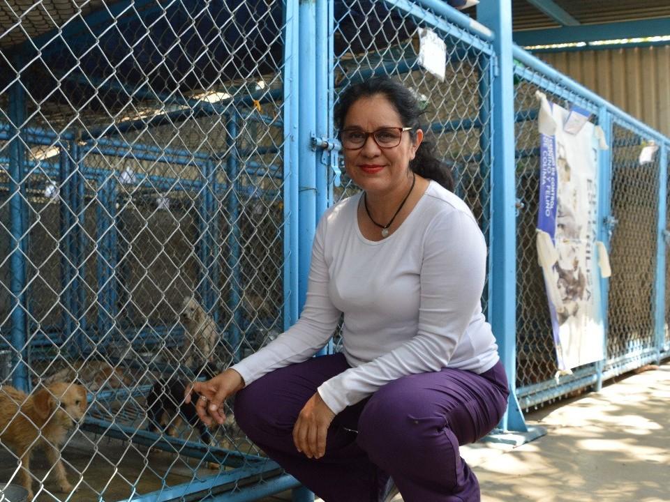 Con gran éxito se lleva a cabo la campaña gratuita de esterilización en el Municipio de Colima.