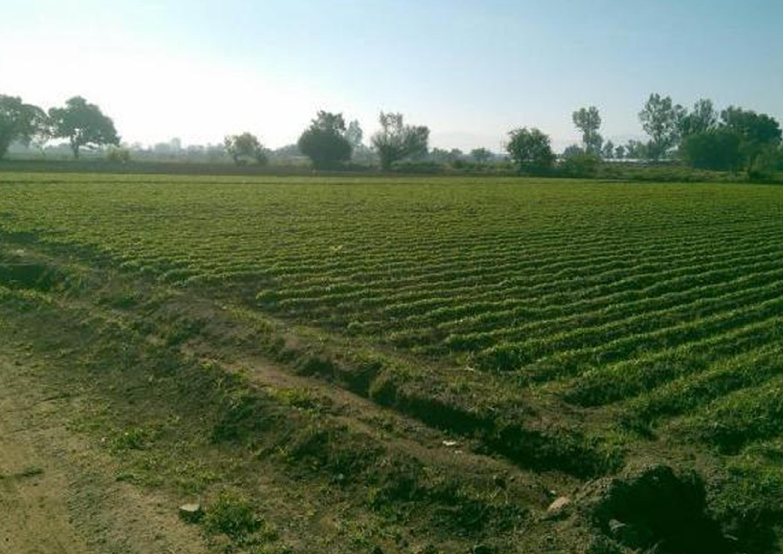 Lamentan que productores tecomenses  vendan sus hectáreas por la inseguridad